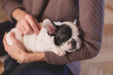 Животные в доме: как навести чистоту